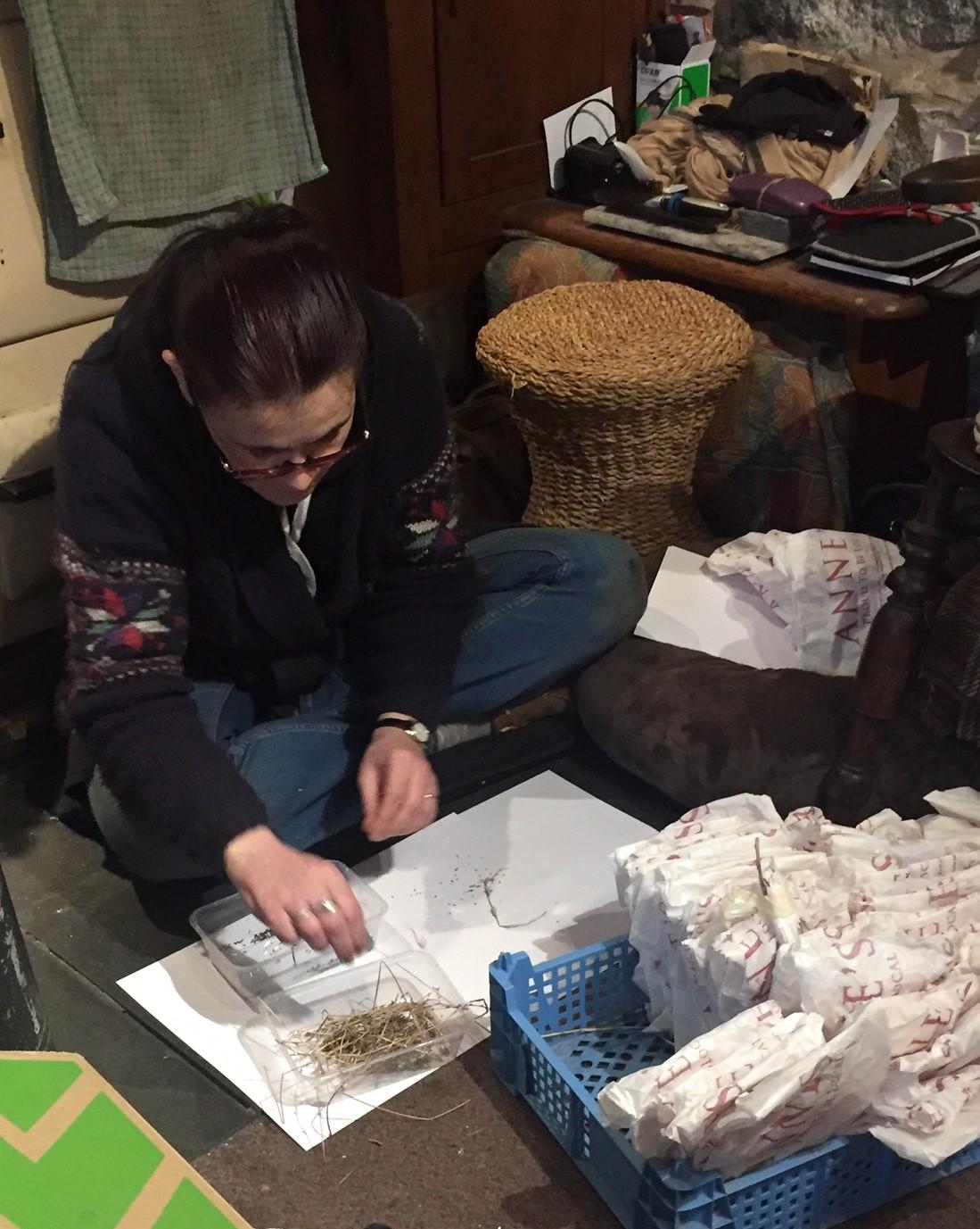 Seed sorting elf