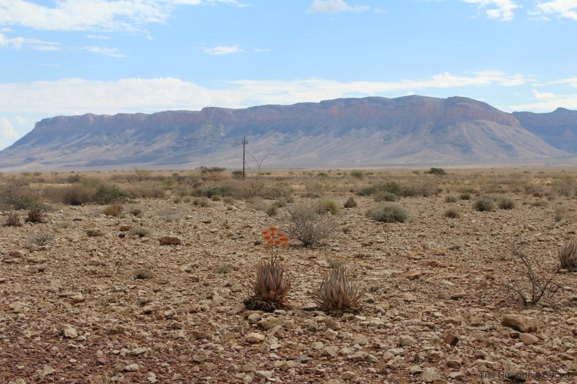 Aloe herreroensis, Namib Naukluft (9)