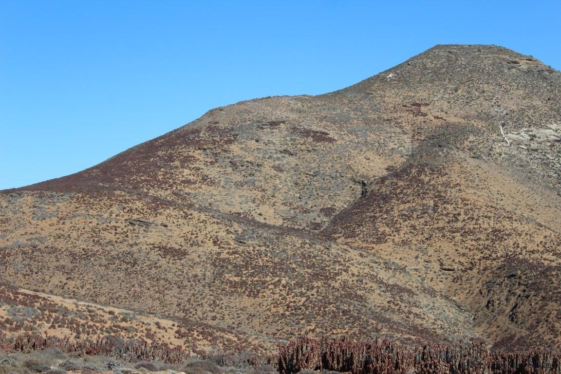 Aloe pearsonii, Helskloof Pass (8)